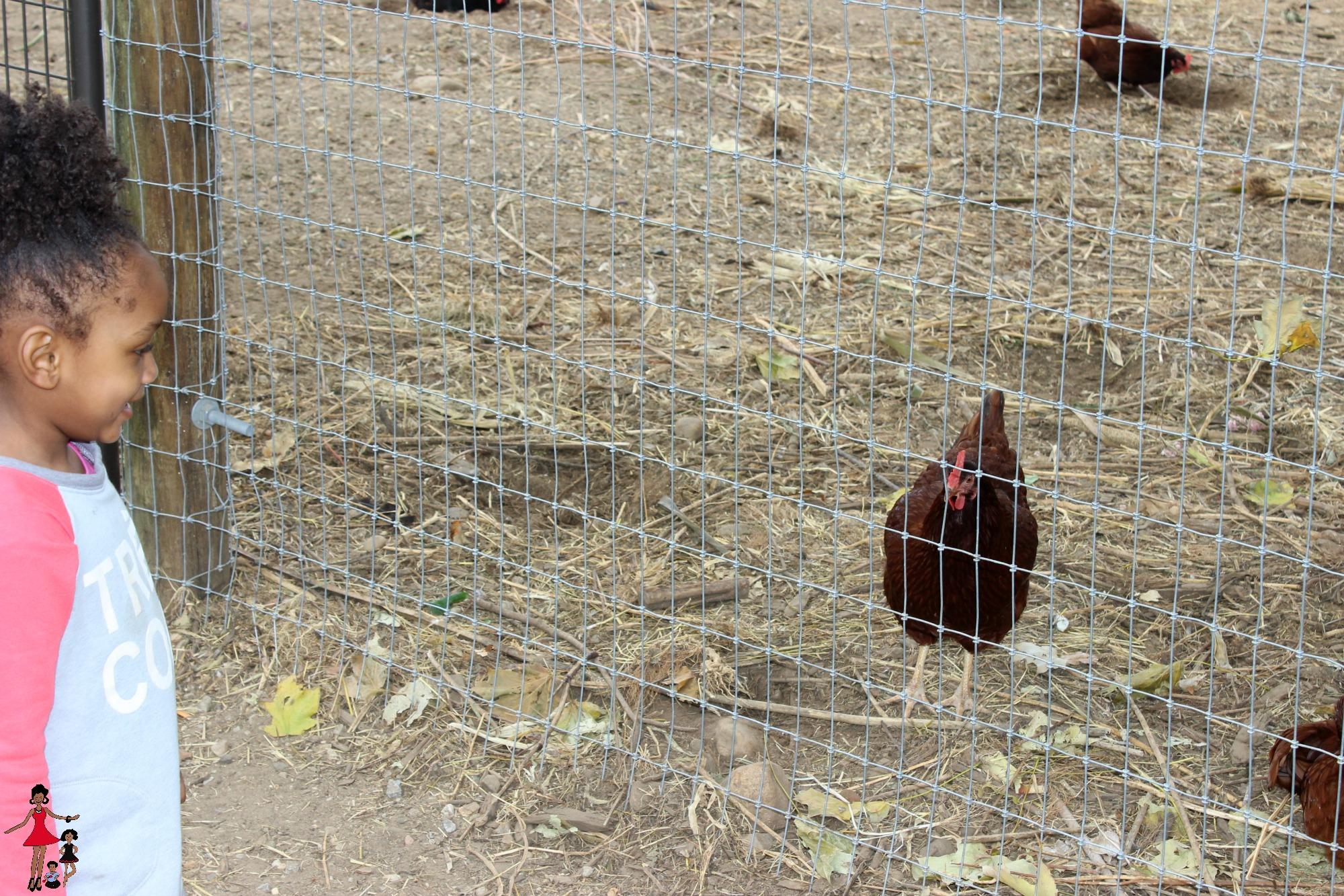 queens-county-farm