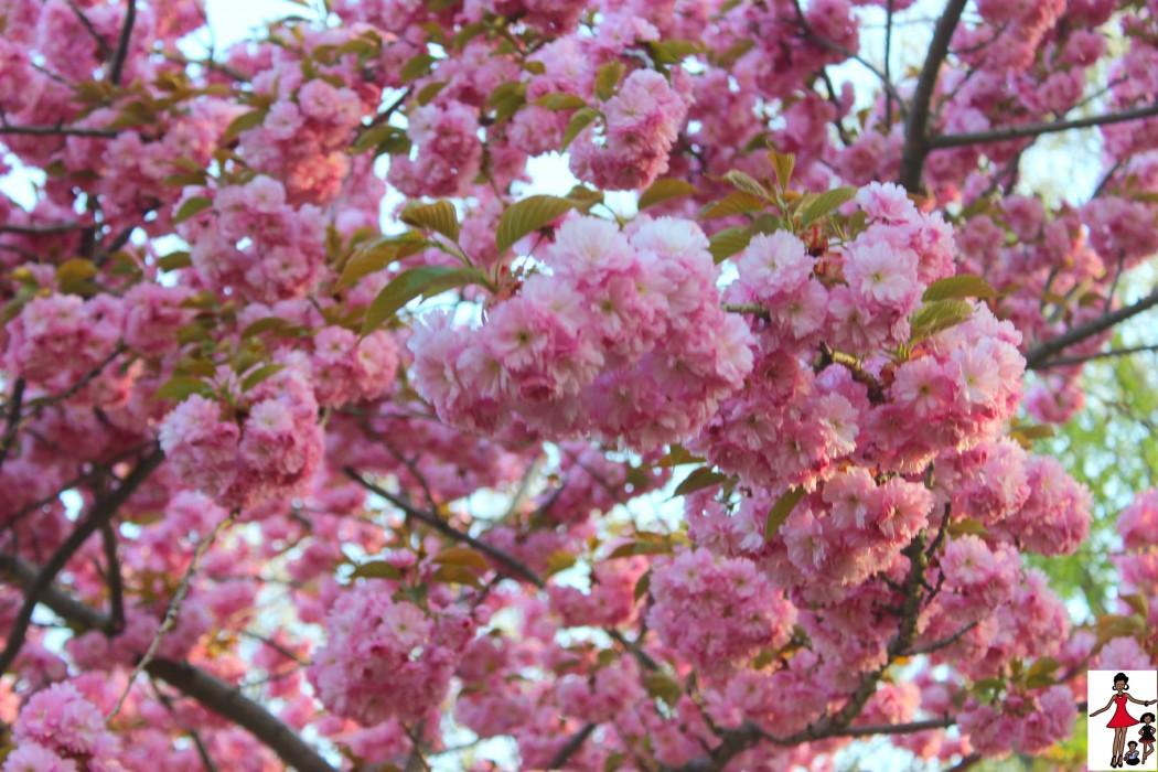 flowers-diy