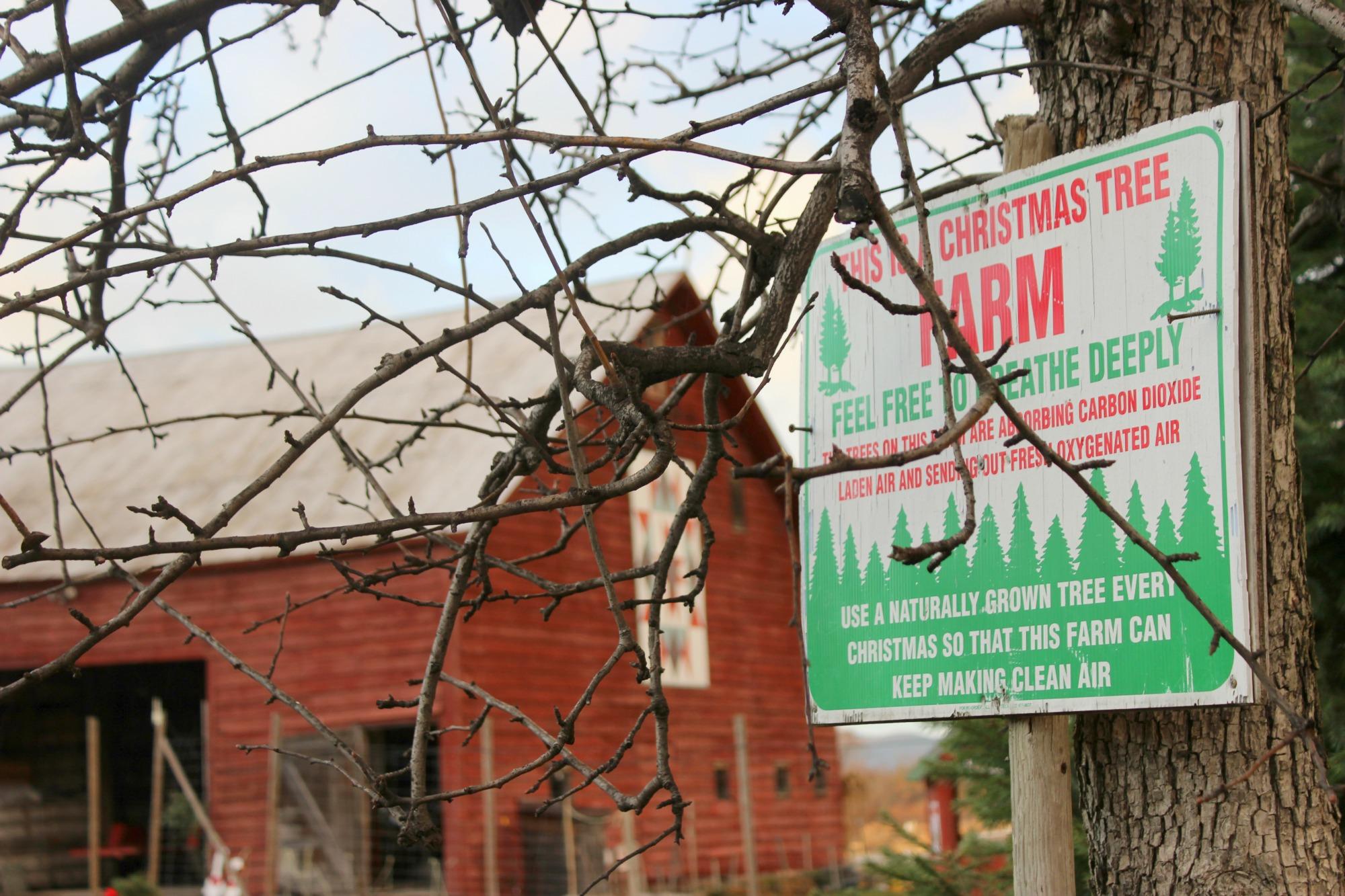 christmas-tree-farm-ny-state