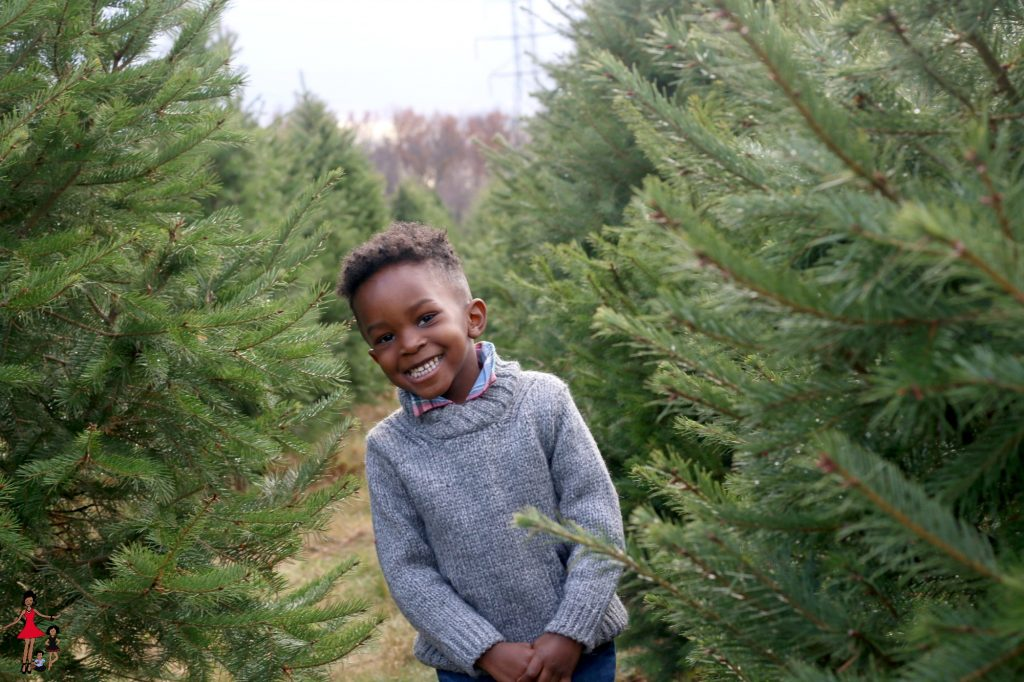 ny-christmas-tree-farm-picking