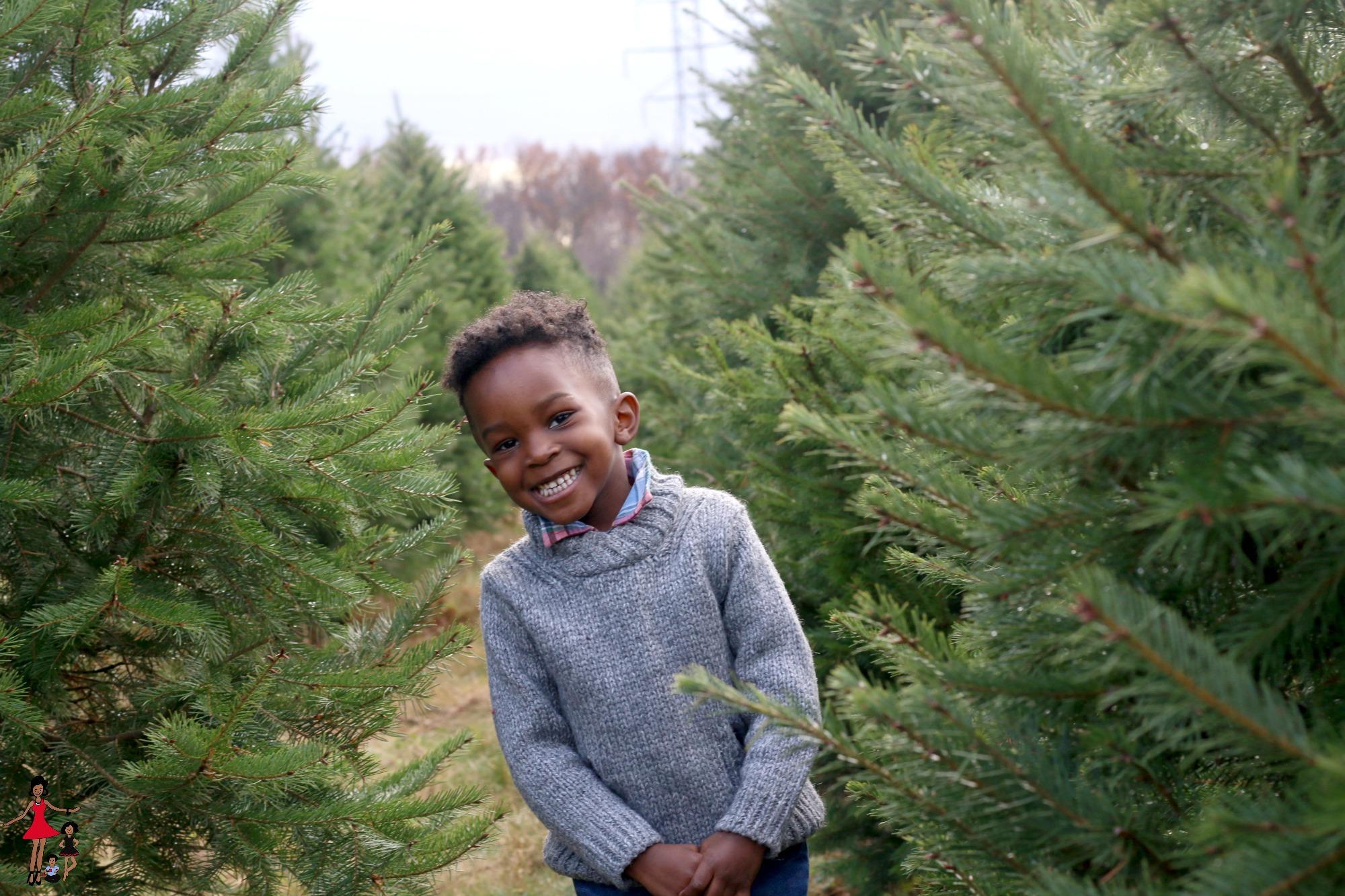 ny-christmas-tree-farm-picking