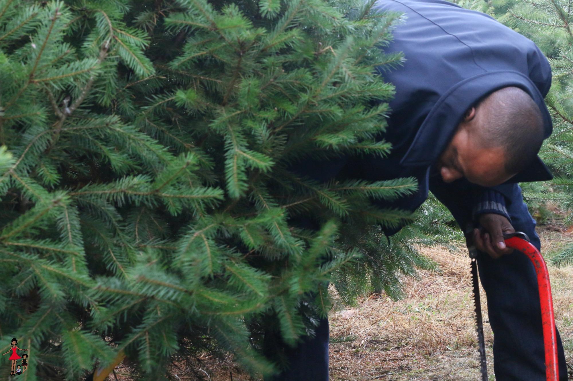 tree-christmas-farm-family