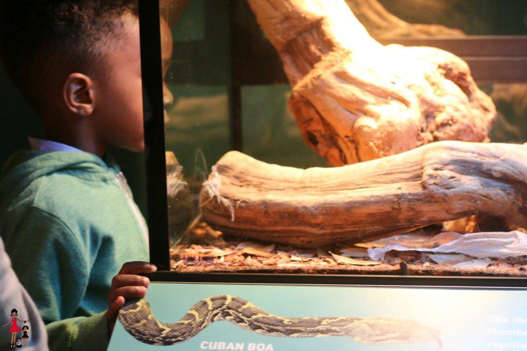 Cuba-Exhibit-AMerican Museum of Natural History