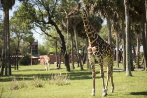 Disney's Animal Kingdom Lodge with Kids