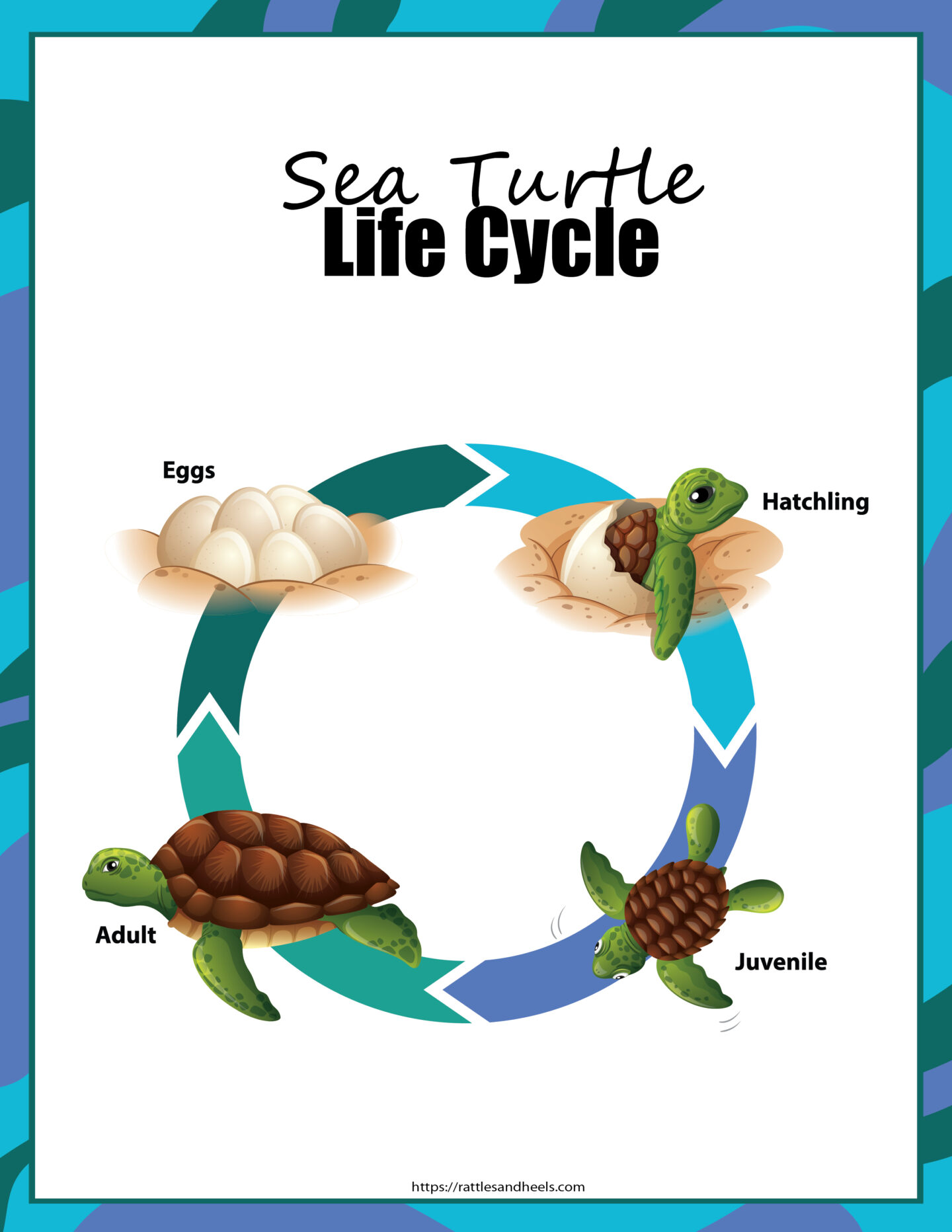 sea turtle activity sheets