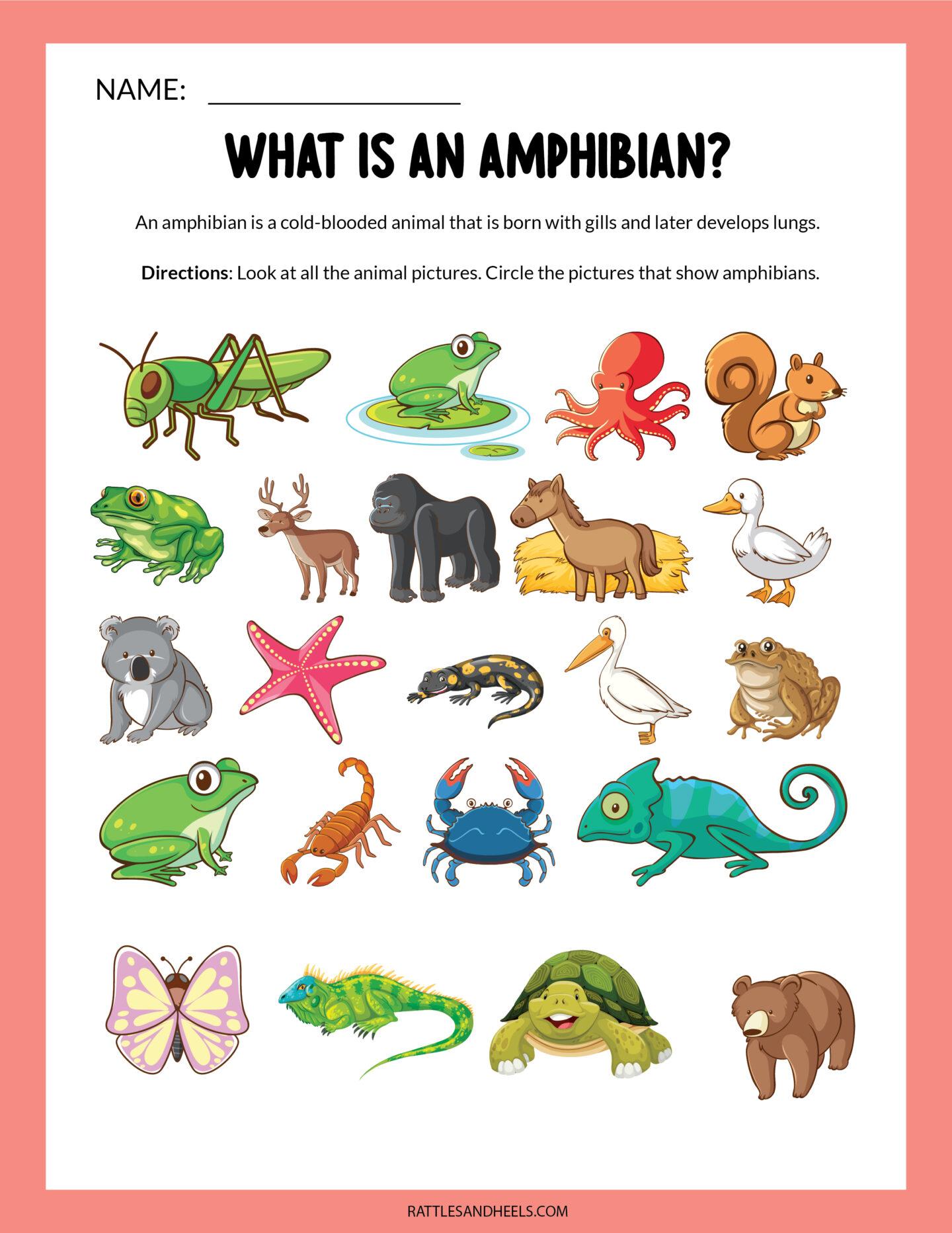 Amphibians Worksheets for Kids | Free Printables